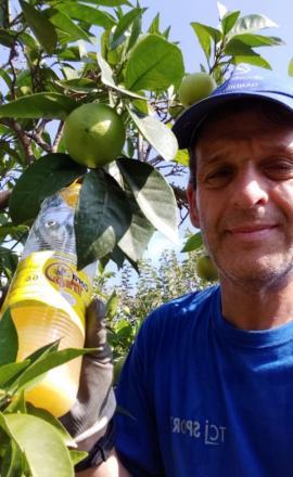 Colocando trampas biológicas contra la mosca de la fruta.