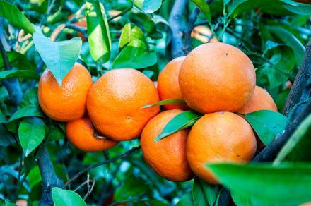Mandarina oferta especial 10%