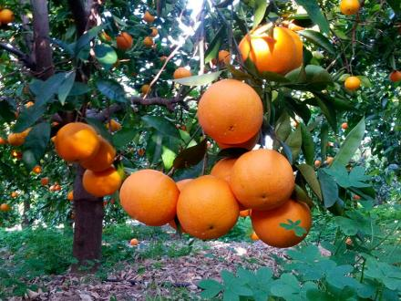 Naranjas Lane Late